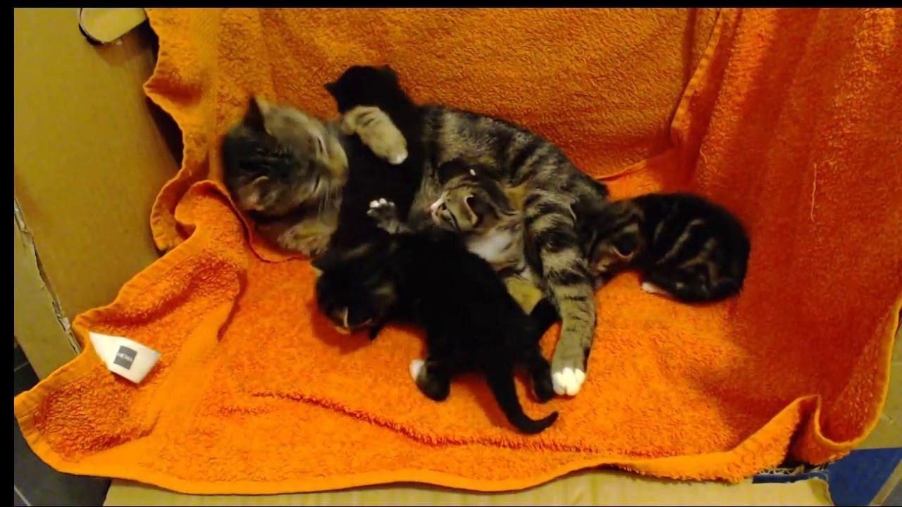 Assault on Mom Kittencam 24 7 kitten live stream