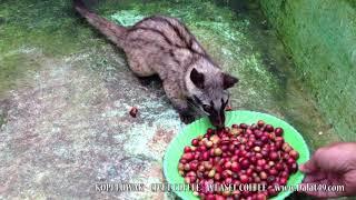 ubudbali Bali Coffee
