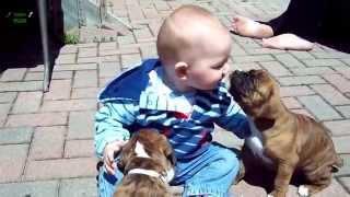 Весёлый Ролик Общение Детей С Животными