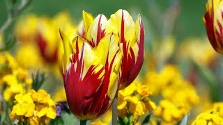 peaceful relaxing music instrumental music quotearth39s flowersquot by tim janis