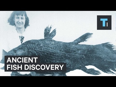 Ancient Fish Discovery