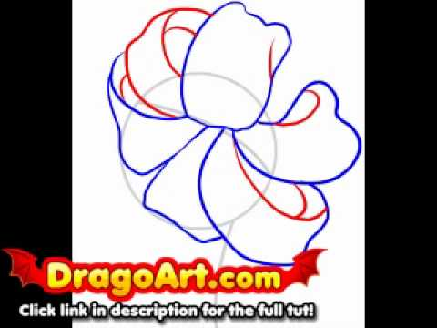 how to draw a tiger lily step by step