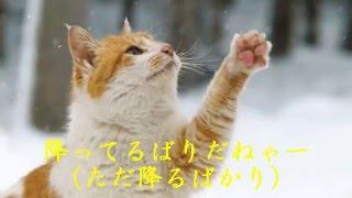 アダモ・・・「雪は降る」 この名曲をzu-zu-versionに仕立て上げると云うお馬鹿な企画をしてしまいました^_^; 今年は暖冬で雪が少ない上に、時期を...