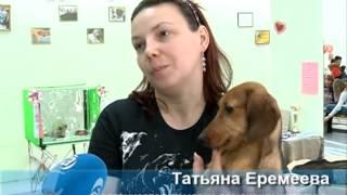 В Благовещенске прошла ярмарка-продажа щенков и котят