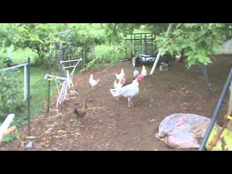 Guy 39 s 1 4 acre farm youtube for Garden design 1 2 acre