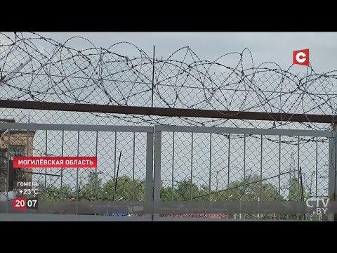 Кого ждёт амнистия в Беларуси (2019) / Лукашенко одобрил проект закона об амнистии