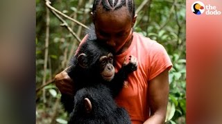 Baby Chimps Raised by This Lady | The Dodo