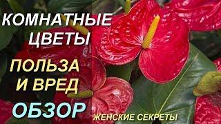 Комнатные цветы самые любимые и популярные, фото и названия. Польза и вред!