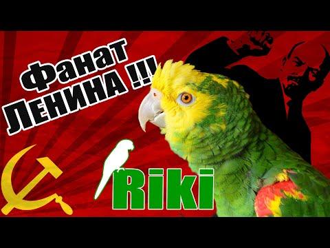 Попугай амазон Рики поет песню про Ленина и митингует!