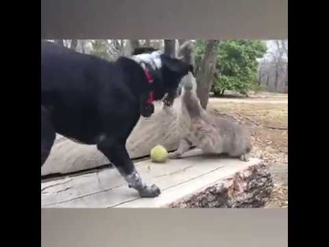 Cats And Dogs Fighting