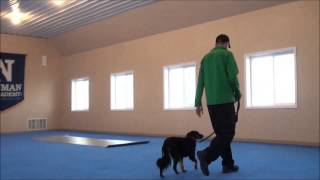 Harry - Boot Camp Dog Training Video