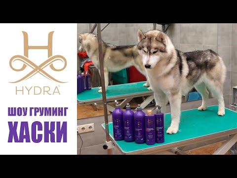 #HYDRA - ШОУ-ГРУМИНГ ХАСКИ / Show Grooming Of Husky With #HYDRA