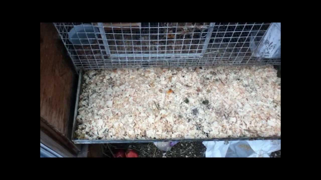 backyard rabbits the family rabbitry youtube