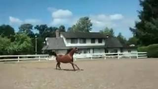 ПРИКОЛЫ С ЛОШАДЬМИ!! FUNNY VIDEOS Приколы с животными смешно до слез Jokes with Horses