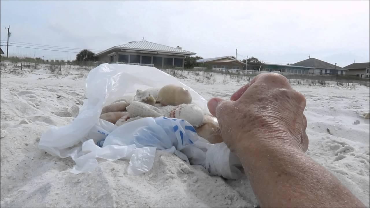 Shelling Panama City Beach Fl April 30