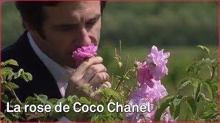 Fragrance N°5, parfum de Grasse