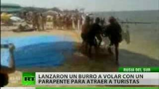 Un burro 'volador' para promover el turismo