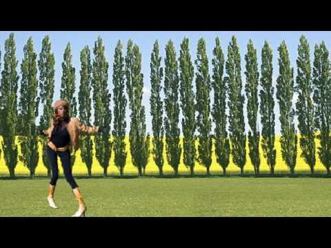 ** Plant Lombardy Poplar Trees**++ Correctly,++ Populus ++ Fast Growing++