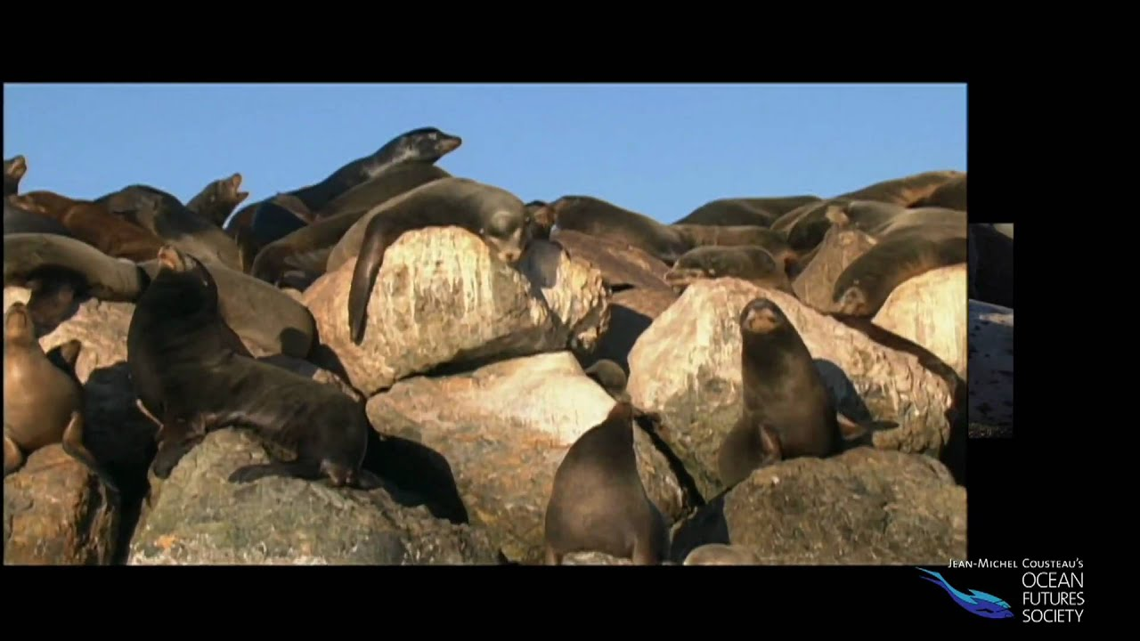 Sea Lions and Seals - YouTube