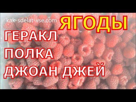 Ягоды малины. Геракл, Полка, Джоан Джей.