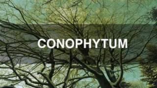 Conophytum-Ukulele