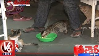 Patients Facing Problems With Cats In Osmania Hospital | Hyderabad | Teenmaar News | V6 News