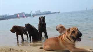 あー夏休み!夏はやっぱり海だ!日本でめったに見られない 珍しい シャ...