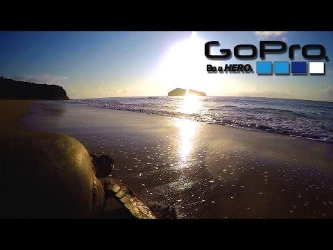 GoPro Hero 4 | Giant turtles & hatchling in Comoros
