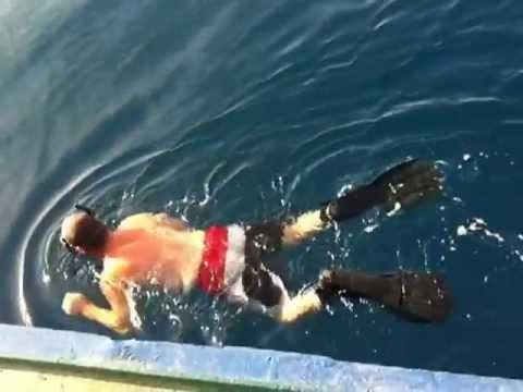 baracuda attack - YouTube