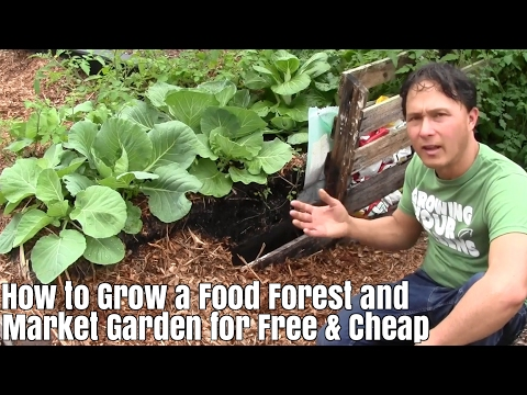 How to Grow a Food Forest & Market Garden for Free and Cheap