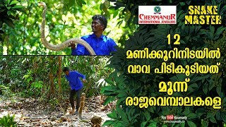 Wow! Vava Suresh caught three king cobras within 12 hours | Snakemaster EP 447