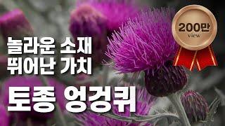 [황금나침반] 한국의 산야초! 엉겅퀴 세계화 / YTN…