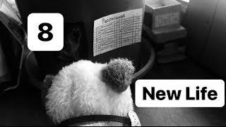 """Сериал """"Новая жизнь"""" 8 серия (The Cat/Dog Collection)"""