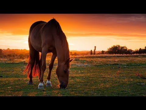 Fight song || Equestrian Music Video