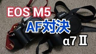 EOS M5 VS α7ⅡAF対決!EF-S 55-250 IS STM