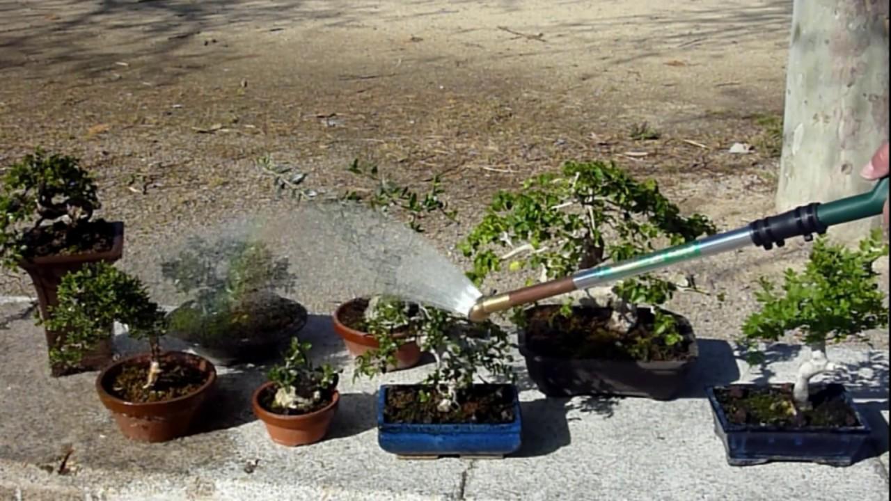 Como se riegan los bons - Tierra para bonsais ...