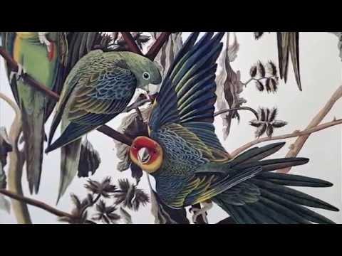 art loft 250 Audubon House Commemorates Renowned Naturalist