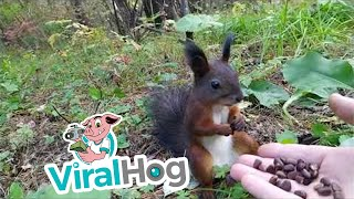 Squirrel Freezes after Feeding on Fresh Snacks || ViralHog