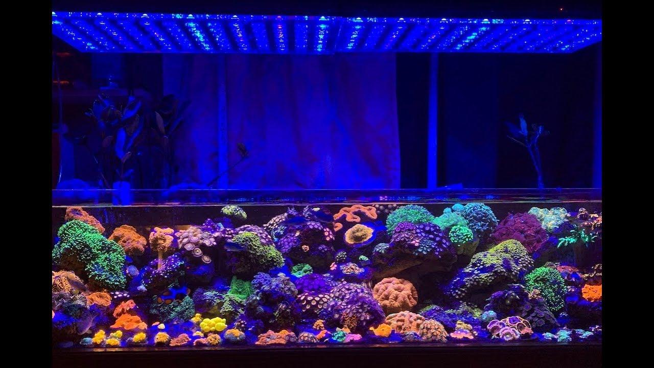 Reef Aquarium With Orphek Atlantik V4