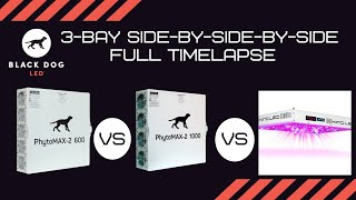 Black Dog LED vs. Modul LED 3-Bay 4X4 Video Full-Side-by-Side Full Timelapse