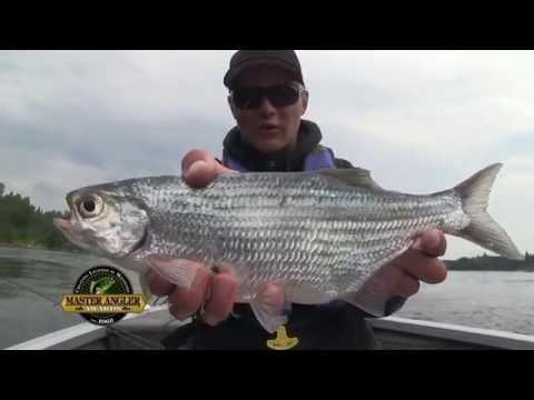 Jumbo Mooneye Fishing in Manitoba - Manitoba Master Angler Minute