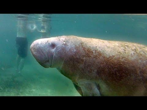 GoPro: Gentle Giants