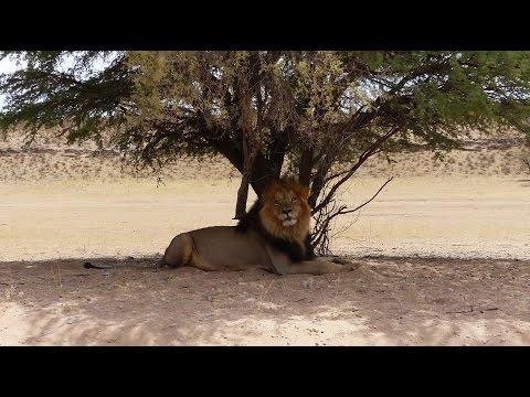 Kgalagadi Transfrontier National Park. HD