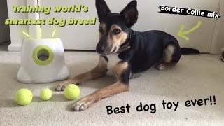 I taught the SMARTEST DOG BREED to play fetch by herself