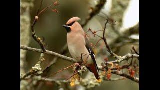 Зимняя жизнь птиц - Миллион вопросов о природе