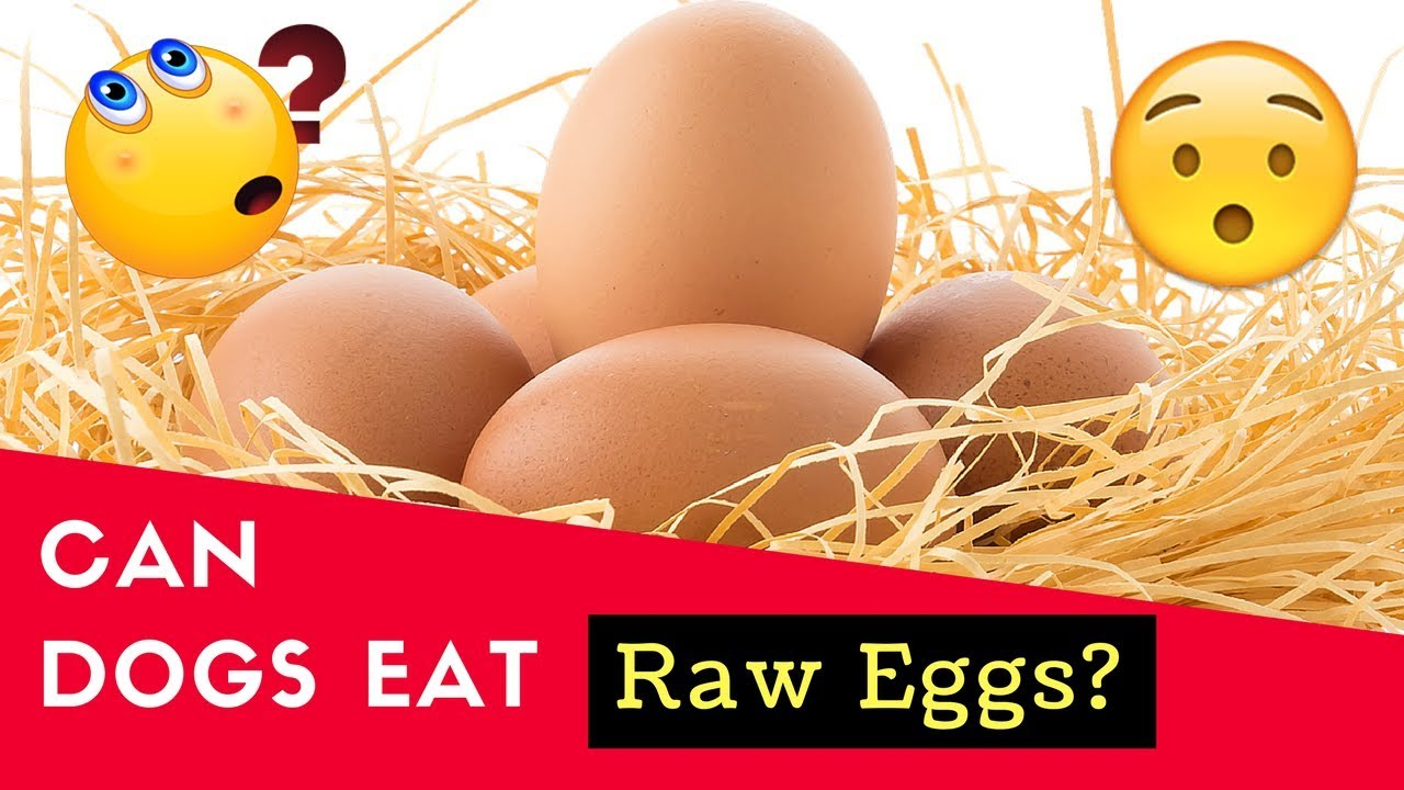 Dogs Eat Raw Or Cooked Eggs