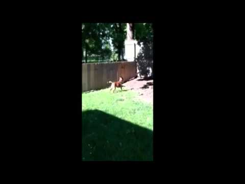 VIRAL VIDEO #7 NEW FENCE FOR THE DOG FAIL!