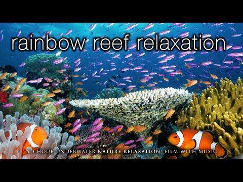 3 HOURS of Amazing Colorful Reef Sea Life  in  1080p No  Tahiti Raratonga Indonesia