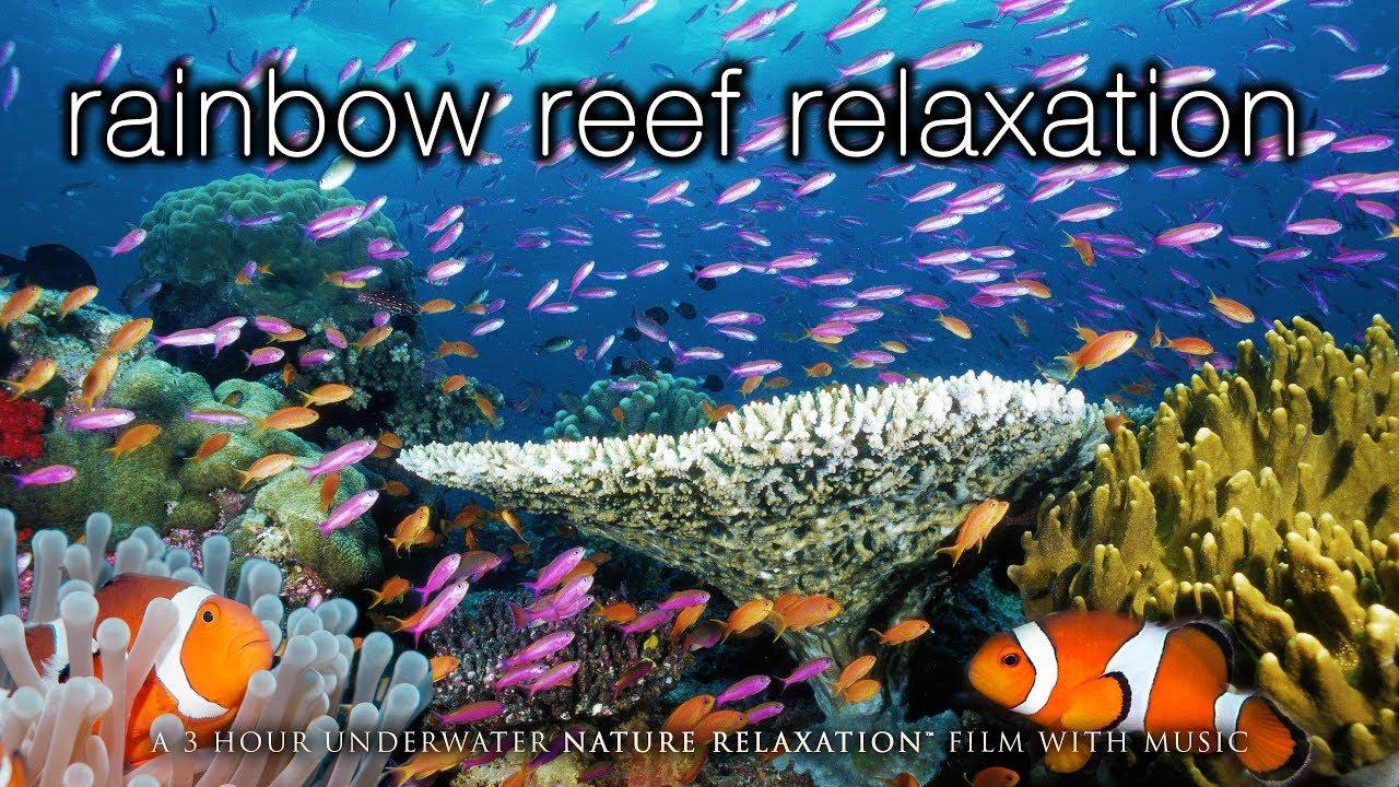 3 HOURS of Amazing Colorful Reef Sea Life  in HD 1080p (No Music) Tahiti, Raratonga, Indonesia