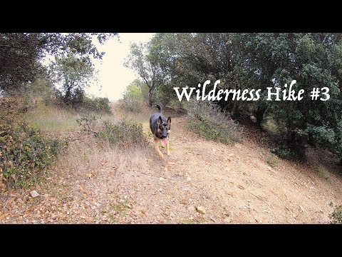 German Shepherd hiking in the Wilderness #3 Hiking with a Dog 3 of 4